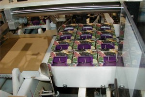 Model-130T-Tray-Packing-Machine